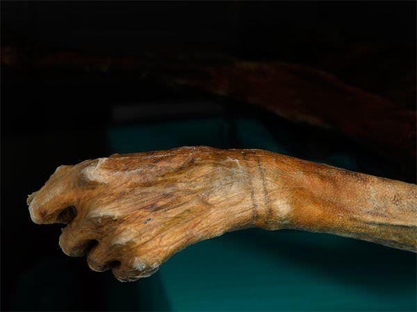 Этци  – ледяная мумия